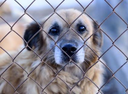 cane adottato abbattuto
