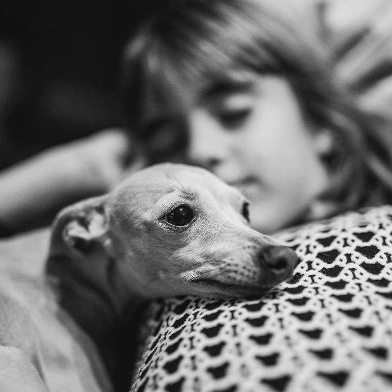 annuncio cane scomparso - Pallina e Bocelli
