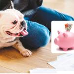 costo cani e gatti