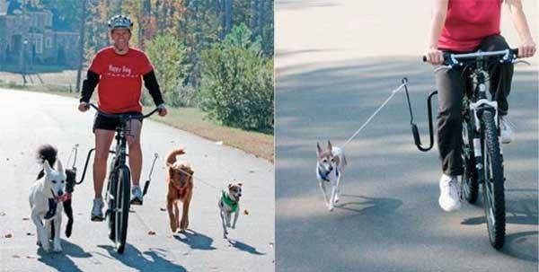 come portare il cane in bicicletta