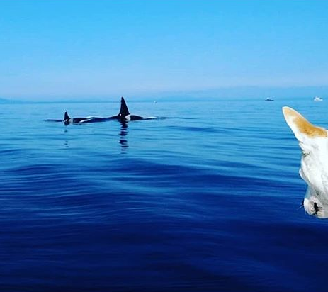 Foto: Instagram - @eba_the_whale_dog