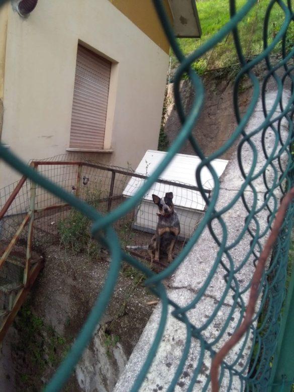 Rambo nel 'suo' terrazzino (Foto: Oipa)