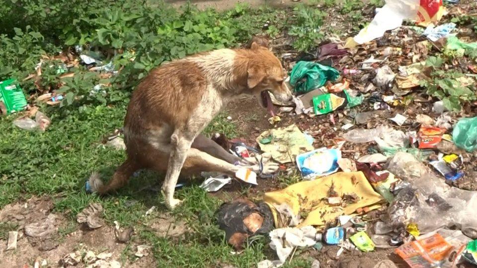 Cane paralizzato abbandonato in discarica con le zampe legate
