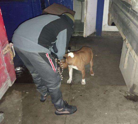 Uno dei cani soccorsi