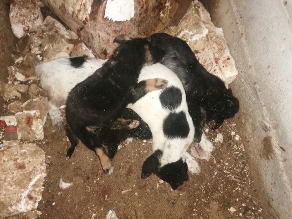 I cuccioli uccisi (Foto: Animali come Noi / Facebook)