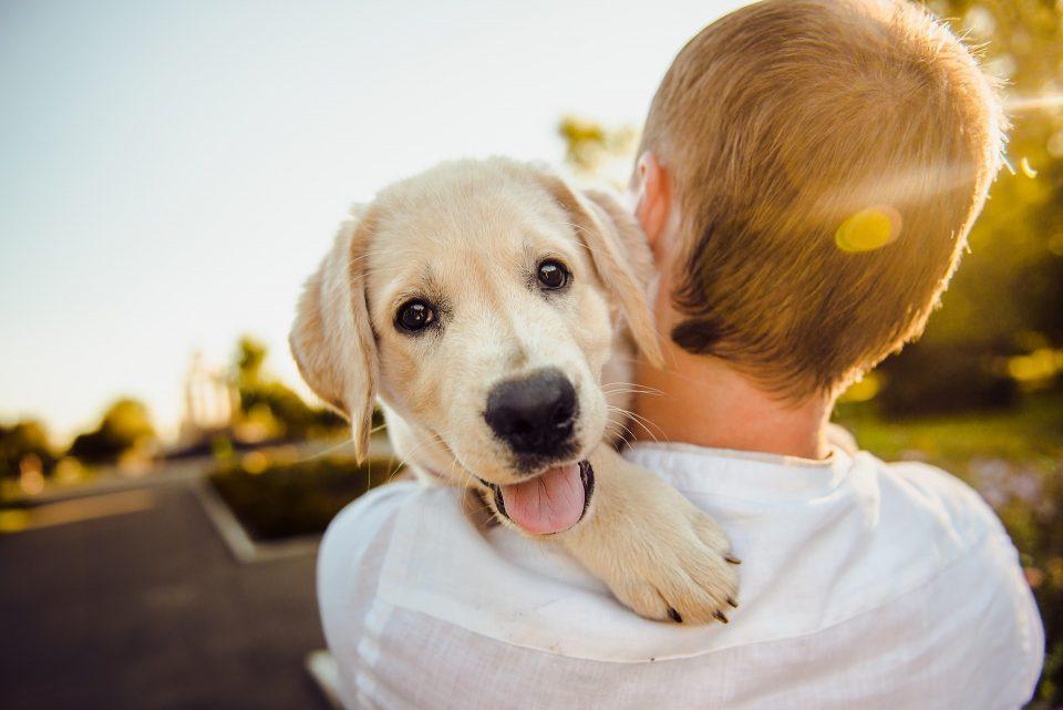 Cos'è la leishmaniosi: sintomi, come curarla e quanto vive un cane malato