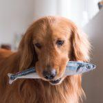 Omega-3 nel cane, ecco perchè è importante