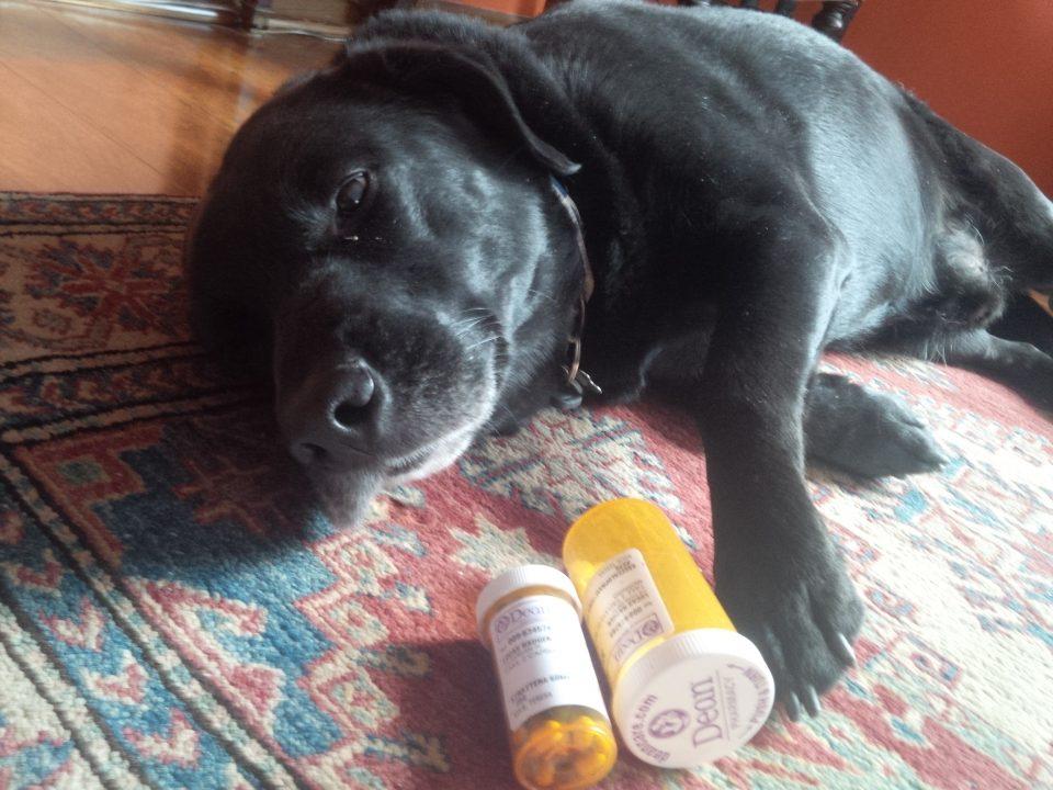 Cane avvelenato ecco cosa fare per salvargli la vita