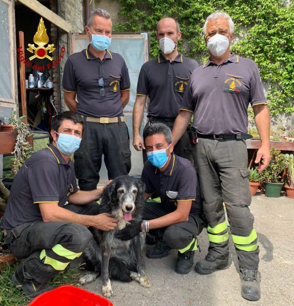Il cane in salvo con la squadra dei vigili del fuoco