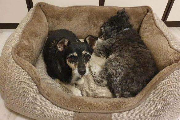 Barbetta con Rufus nella nuova casa